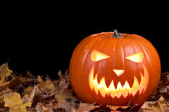 Jack-o-lantern Royalty Free Stock Photos