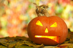 Jack O'Lantern. Angry Halloween pumpkin lying outdoors on autumn leaves Royalty Free Stock Images