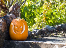 Jack - o - Lantern royalty free stock images
