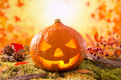 Jack O'Lantern in an autumn nature still life Royalty Free Stock Photos