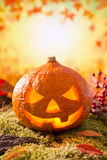 Jack O'Lantern in an autumn nature still life Royalty Free Stock Photo