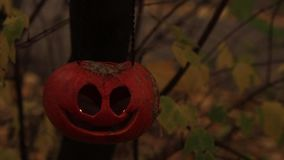 Jack-o-lantern on a branch with yellow leaves. Jack-o-lantern hanging on a branch with shaking yellow leaves stock video