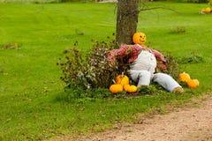 Jack-O-Lantern Farmer by Tree. Pumpkin head scarecrow sitting against a tree Royalty Free Stock Image