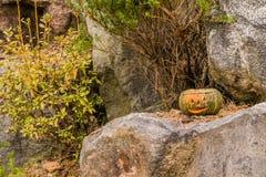 Jack-O-Lantern sitting on large boulder. Jack-O-Lantern with flame visible inside sitting on large boulder next to pine tree Stock Photography