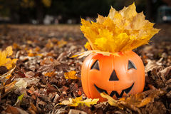 Jack o lantern on the forest floor Stock Photography