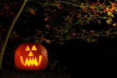 Jack-o-lantern at night. Vampire jack-o-lantern outside at night Royalty Free Stock Images