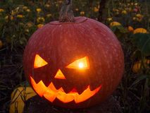 Jack-o'-lantern on a Pumpkin Patch Stock Photos