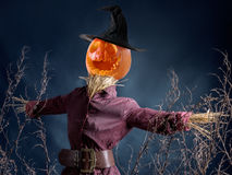 Jack-o-lantern pumpkin scarecrow. Halloween scarecrow with jack-o-lantern pumpkin head on dark blue background Royalty Free Stock Images