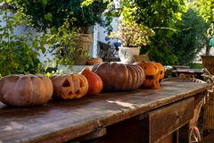 Jack o lantern pumpkins for Halloween. Halloween jack o lantern pumpkins sitting in a row on a table in a garden setting royalty free stock photography