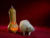 Jack-o'-lantern and rat. Rat and Halloween holiday symbol - light Jack-o'-lantern Royalty Free Stock Photography