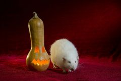 Jack-o'-lantern and rat. Rat and Halloween holiday symbol - light Jack-o'-lantern Royalty Free Stock Image