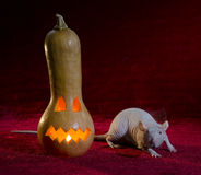 Jack-o'-lantern and rat. Royalty Free Stock Images