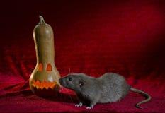 Jack-o'-lantern and rat. stock images