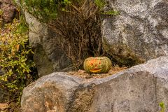 Jack-O-Lantern sitting on large boulder. Jack-O-Lantern with flame visible inside sitting on large boulder next to pine tree Stock Image