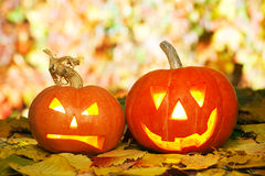 Jack O'Lanterns. Two Helloween pumpkins lying outdoors on autumn leaves Stock Image