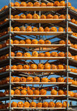 Jack-o-lanterns on scaffolding Stock Images