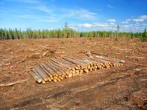 Jack Pine Logging Michigan Royalty Free Stock Photo