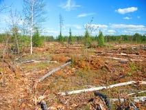 Jack Pine Logging Michigan Royalty Free Stock Images