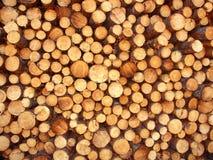 Jack Pine Logging Michigan Stock Photos