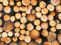 Jack Pine Logging Michigan royalty free stock image