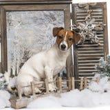 Jack Russel che si siede su un ponte in un paesaggio di inverno Fotografia Stock