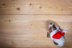 Jack russel  in red sunta cap on wooden background Stock Photography