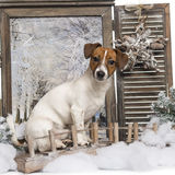 Jack russel sitting on a bridge in a winter scenery Stock Photography
