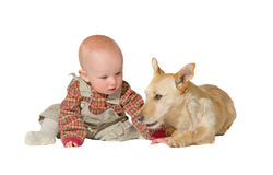 Jack russel terrier and baby. A faithful jack russel terrier lies patiently guarding an inquisitive little baby, his friend and companion for life isolated on Royalty Free Stock Photo
