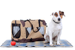 Jack Russel Terrier with a carrying bag Stock Photos