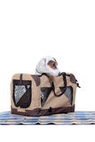 Jack Russel Terrier with a carrying bag stock photo