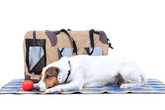 Jack Russel Terrier with a carrying bag Royalty Free Stock Photos