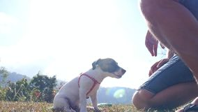 Jack Russel Terrier Playing Outdoor mit Inhaber stock video footage