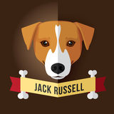 Jack russell Photographie stock