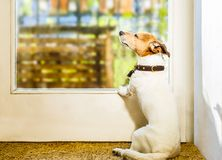 Dog relaxing under the sun at home Stock Photos