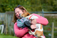 Jack Russell dog kissing woman. On face Royalty Free Stock Image
