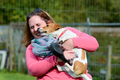 Jack Russell dog kissing woman. On face Royalty Free Stock Photography