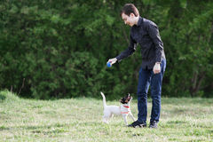 JACK RUSSELL PARSON TERRIER sitting on grass. Cheerful and happy young man playing with his dog Jack Russell in summer park Royalty Free Stock Image