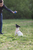 JACK RUSSELL PARSON TERRIER sitting on grass Royalty Free Stock Photos