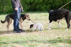 JACK RUSSELL PRÄST TERRIER och stor hundkapplöpning royaltyfri fotografi