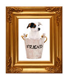 Jack Russell puppy in wooden bucket with golden photo frame Royalty Free Stock Photography