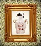 Jack Russell puppy in wooden bucket with golden photo frame Stock Photography