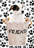 Jack Russell puppy in wooden bucket Royalty Free Stock Photos