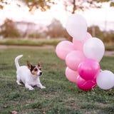 Dog and balloons stock photos