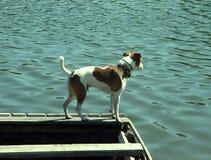 Jack Russell-terriërhond die zich op boot bevinden royalty-vrije stock fotografie