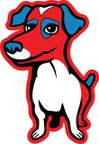 Jack Russell Terrier. A red and blue Jack Russell Terrier Stock Photo