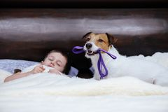 Dog with leash in mouth wakes up his companion to go for a walk Stock Images