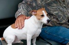 Jack Russell Terrier, bemannt besten Freund lizenzfreie stockfotografie