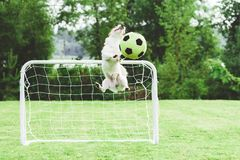 Comic dog catching football soccer ball saving children`s goal Stock Image