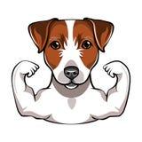 Jack Russell Terrier con muscule Vettore illustrazione vettoriale