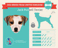 Jack Russell Terrier dog breed  infographics Royalty Free Stock Images